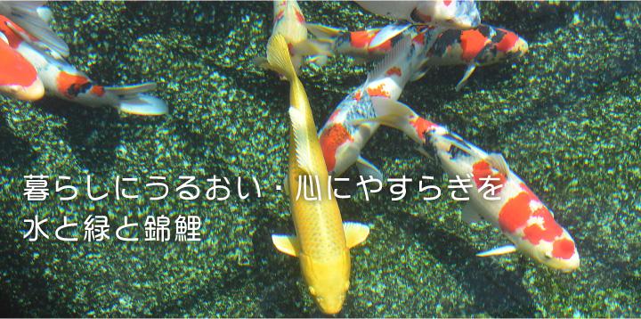 暮らしにうるおい・心にやすらぎを 水と緑と錦鯉